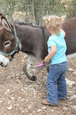 Nice donkey.